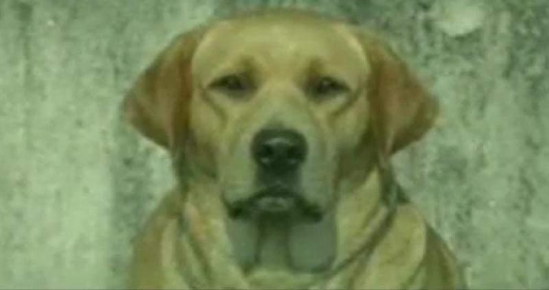 Cachorro Suicída