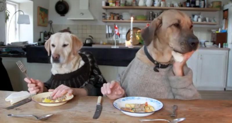Dois cachorros jantando