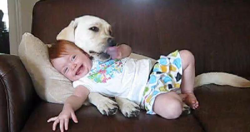 Se você gosta de cãezinhos e bebês, você vai adorar isso