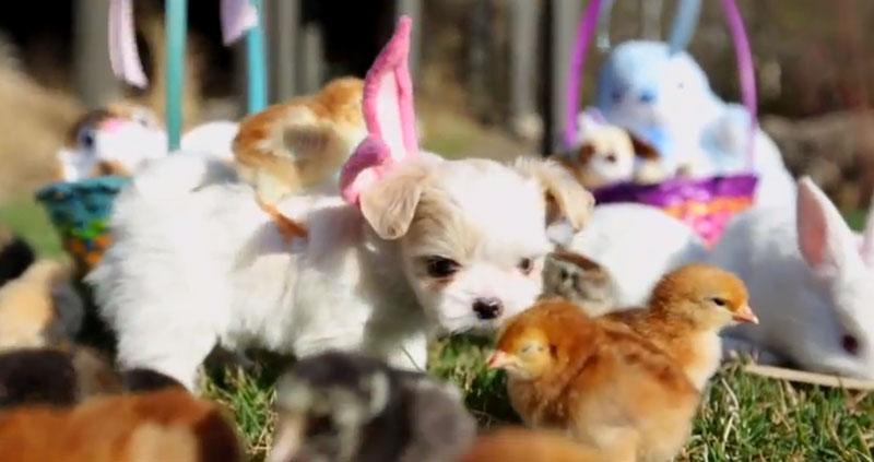 Cachorrinho da Páscoa